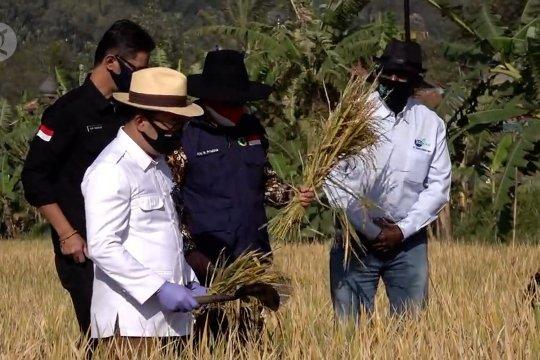 Ridwan Kamil tinjau panen raya di Cimahi dengan metode Biogro