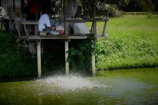 Tiada rumah tanpa kolam di Kampung Patin
