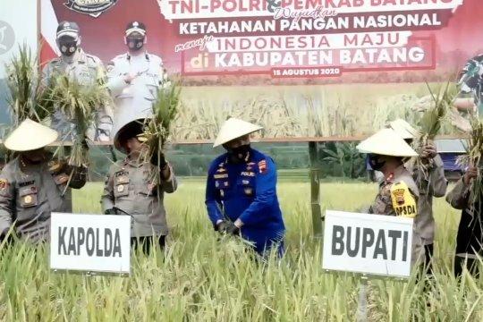 TNI-Polri lakukan panen raya di Kabupaten Batang