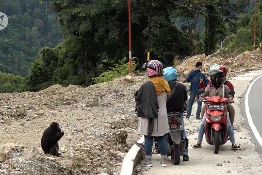 BKSDA larang warga beri makan kera hitam endemik Sulteng