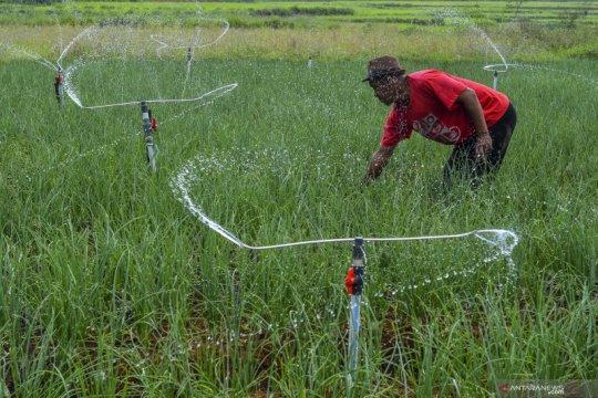 NTP Agustus naik, serikat petani keluhkan harga sayuran masih anjlok