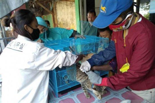 Petugas vaksin rabies 32 hewan peliharaan di Penjaringan