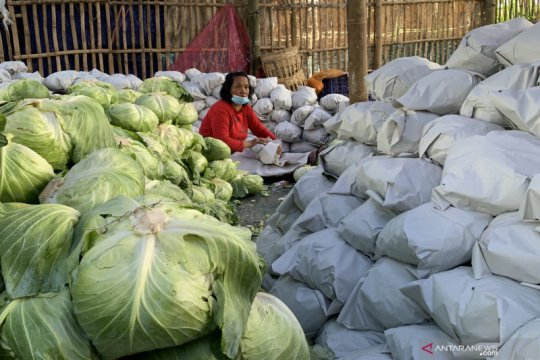 Kementan siap buka akses pasar ekspor produk hortikultura asal Malang