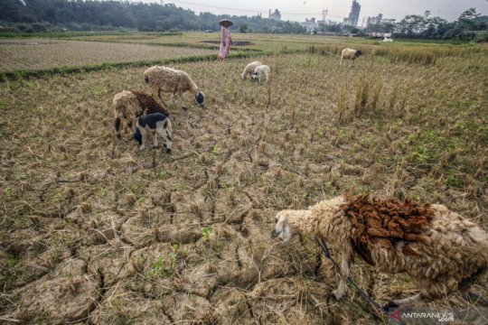 Kekeringan mulai melanda wilayah Jawa Barat