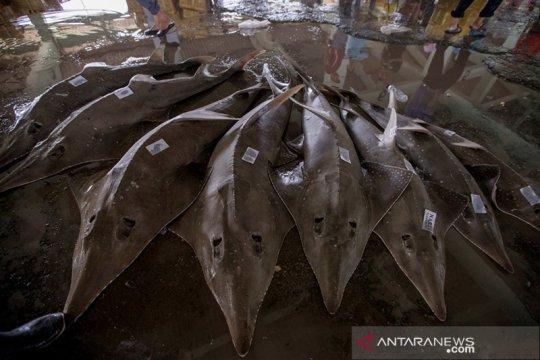Anggota DPR minta perkuat upaya cegah kepunahan ikan