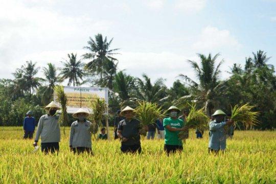 Dompet Dhuafa manfaatkan Wakaf Produktif untuk pembiayaan pertanian