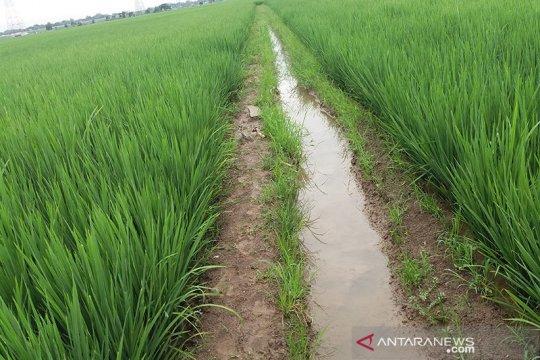Dengan alsintan, Sumsel dukung OKU jadi sentra produksi beras