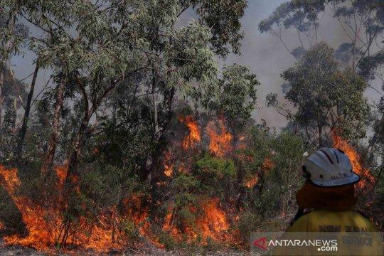 Kebakaran hutan ancam kawasan wisata di Pulau Fraser Australia