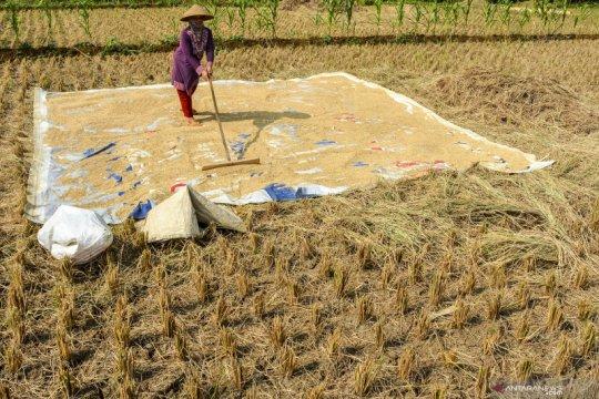 Merespons peringatan FAO, Pemerintah siapkan pangan berkelanjutan