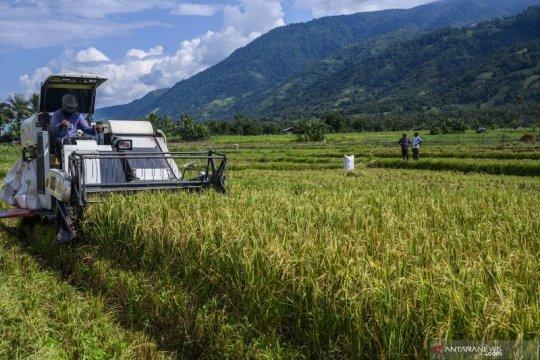 PermenLHK no 24 tahun 2020 fondasi regulasi penyediaan lahan food estate