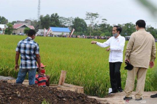 "Presiden: Pelaksanaan ""food estate"" menunjukkan kemajuan"