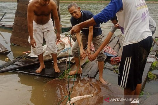 Pemkab Musi Banyuasin dorong masyarakat peduli biota sungai