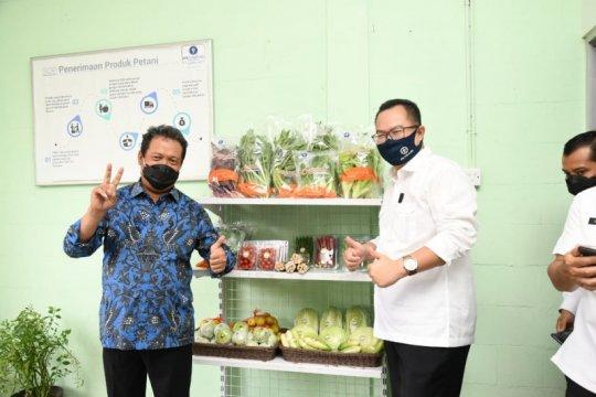 Wamenhan minta IPB University kembangkan pertanian singkong dan sagu