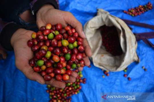 Volume resi gudang kopi naik 215 persen kuartal III 2020