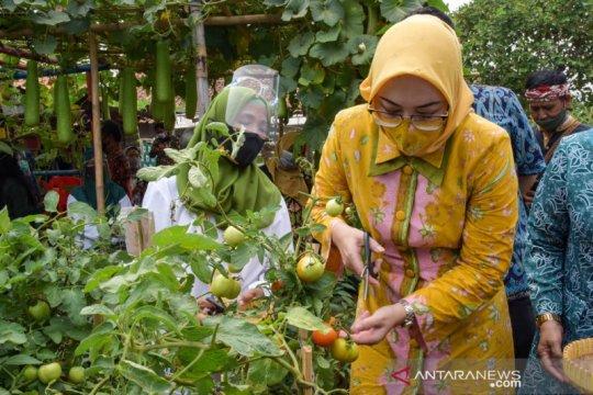 Produsen benih sayuran ajak ibu-ibu bercocok tanam di pekarangan rumah