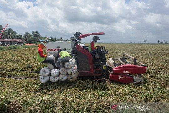 Panen raya di area lumbung pangan nasional hasilkan 12 ton padi