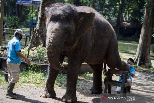 Perawatan satwa saat pandemi di Kebun Binatang Bandung