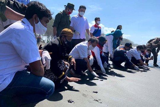 Pertamina lanjutkan program konservasi penyu di pesisir Cilacap