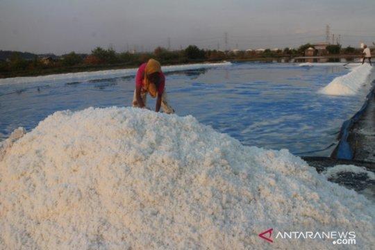 HMPG: Produksi garam Jatim diprediksi turun