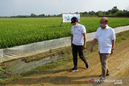 Pupuk Indonesia kembangkan Program Agro Solution sejahterakan petani