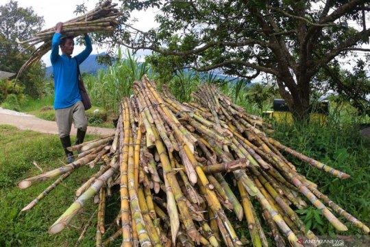 Panen hingga November, Kementan sebut produksi gula capai 2,2 juta ton