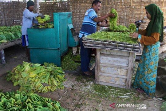 Pemerintah diminta lindungi petani tembakau melalui tarif cukai