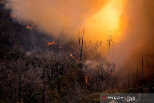 Kebakaran area hutan nasional di Los Angeles