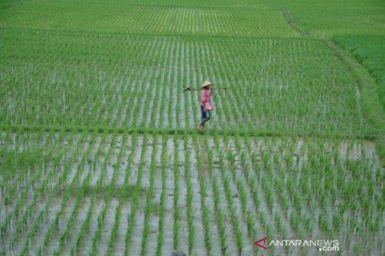 Mandiri AXA dorong perlindungan petani dengan asuransi indeks cuaca
