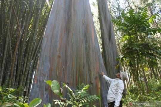 Kalimantan Selatan contoh pengelolaan fungsi hutan Jatim