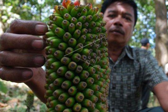 Dinilai menguntungkan, Jawa Barat bakal kembangkan budi daya porang