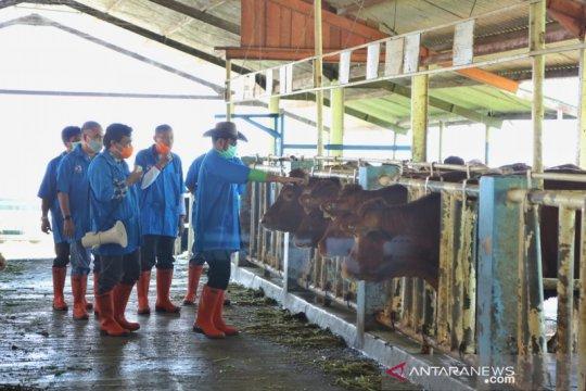 Dorong ternak sapi unggul, Mentan berencana perbanyak balai embrio