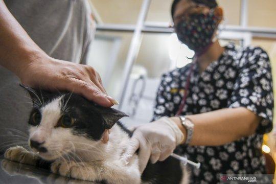 Dua saksi penembakan kucing Rawamangun diperiksa polisi
