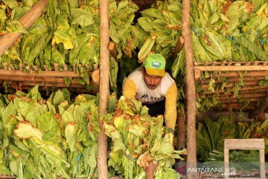 Petani tembakau kesulitan menjual hasil panen