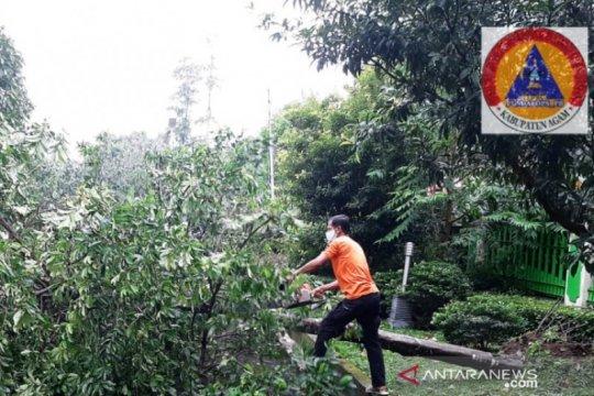 BPBD : Belasan pohon tumbang akibat diterjang angin kencang di Agam