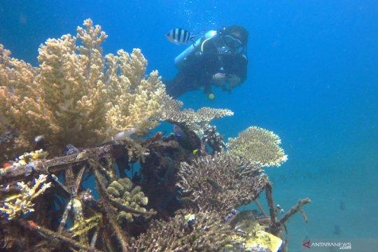 Program Padat Karya restorasi terbesar terumbu karang resmi meluncur