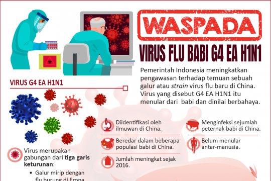 Waspada virus flu babi G4 EA H1N1