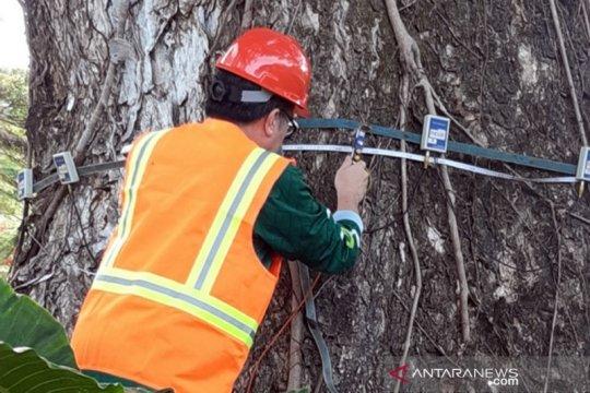 IPB University latih puluhan calon 'dokter pohon'