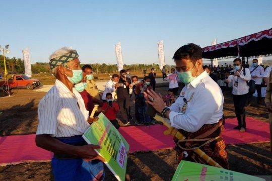 Tanam jagung di Sumba Tengah, Mentan pastikan produksi tercukupi
