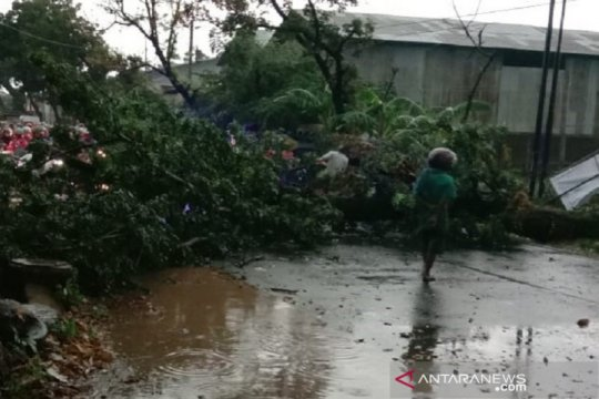 Puluhan pohon di Kudus tumbang akibat diterjang angin kencang