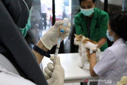 Hari Rabies Sedunia, KPKP Jakpus beri sterilisasi dan vaksinasi gratis