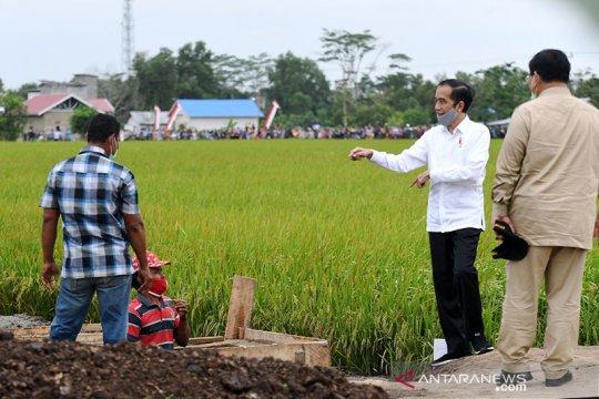 """Presiden minta model bisnis """"food estate"""" Kalteng-Sumut segera disusun"""