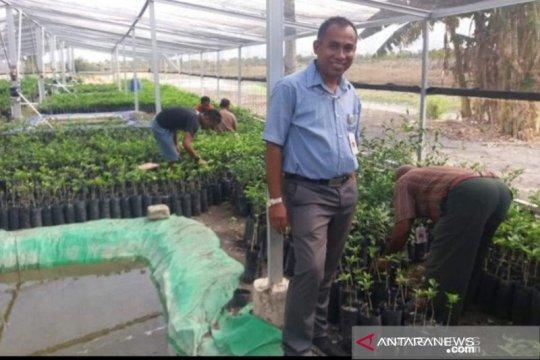 """Peneliti: Sumba Tengah potensial jadi lokasi """"food estate"""""""