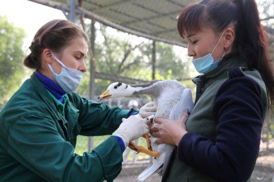 Irak temukan wabah flu burung di Provinsi Salahudin