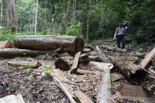 Pembalakan liar marak terjadi di Pegunungan Seulawah