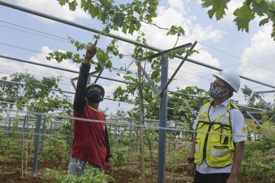 Semen Indonesia gandeng Kementan budidayakan tanaman buah
