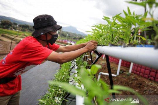 Pemkot Bandung buat lahan pertanian untuk edukasi ketahanan pangan