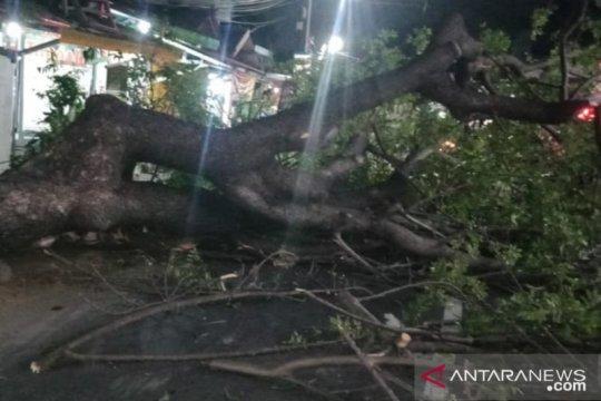 Pohon tumbang di Jaktim timpa warga dan merusak motor