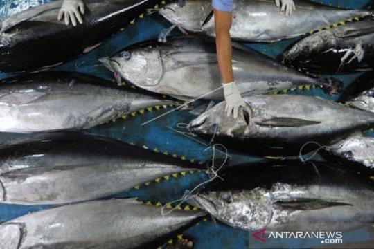 KKP sebut rencana pengelolaan perikanan tuna mendesak untuk dibuat