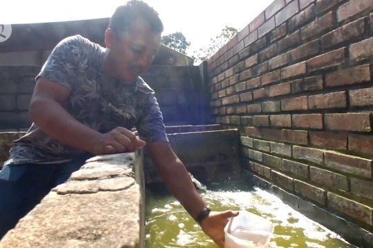 Budidaya kutu air bernilai jutaan rupiah