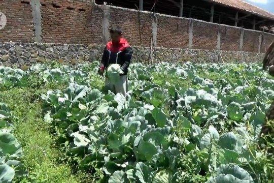 DPRD Magetan dorong Pemkab borong hasil sayuran petani